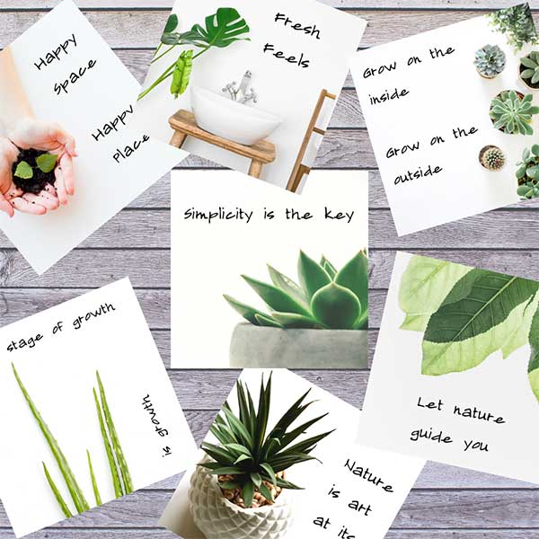 Plants Indoor White Background Preview
